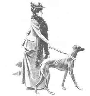 dog-walking-via-bl-edited