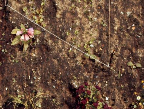 soil edited.jpg