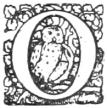 owl o edited